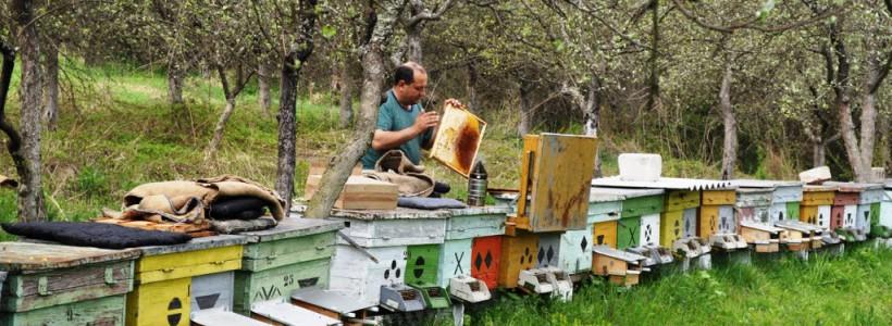 apicultor Arad