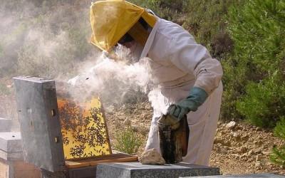 productie de miere compromisa de seceta