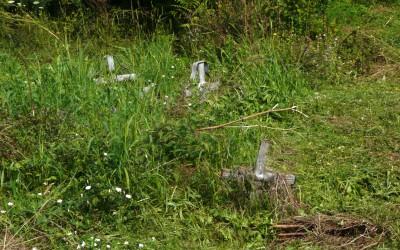 cimitirul saracilor din timisoara napadit de buruieni