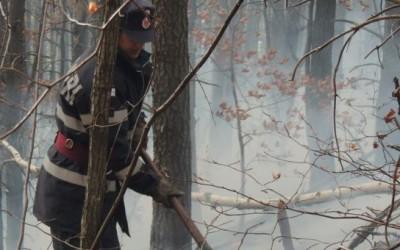 Aproximativ opt hectare dintr-o litieră de pădure de mesteacăn şi pin situată pe raza Ocolului Silvic Boşorod, din judeţul Hunedoara, în Masivul Şureanu, au fost cuprinse de un incendiu.