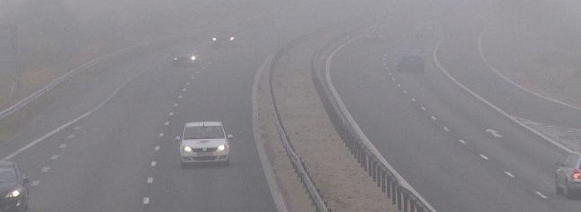cod galben de ceata in Banat