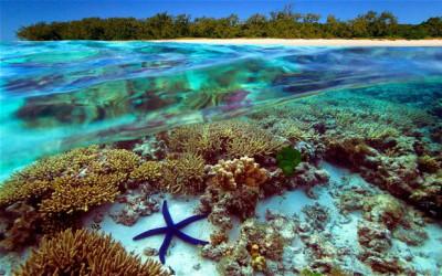 Pericol: Coralii din Marea Barieră de Corali ingerează plastic