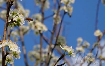 flori primavara meteo