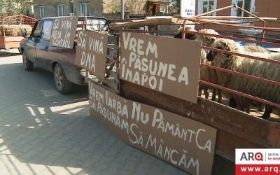 Situație tensionată, miercuri, în fața primăriei Macea din județul Arad, unde crescătorii de animale au adus zeci de oi în semn de protest.