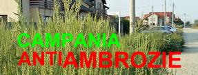 Chiar dacă (încă) nu te afectează, gândește-te că tu sau cei dragi poți fi victima alergiei la cea mai cumplită plantă care există de câțiva ani în România: AMBROZIA!!