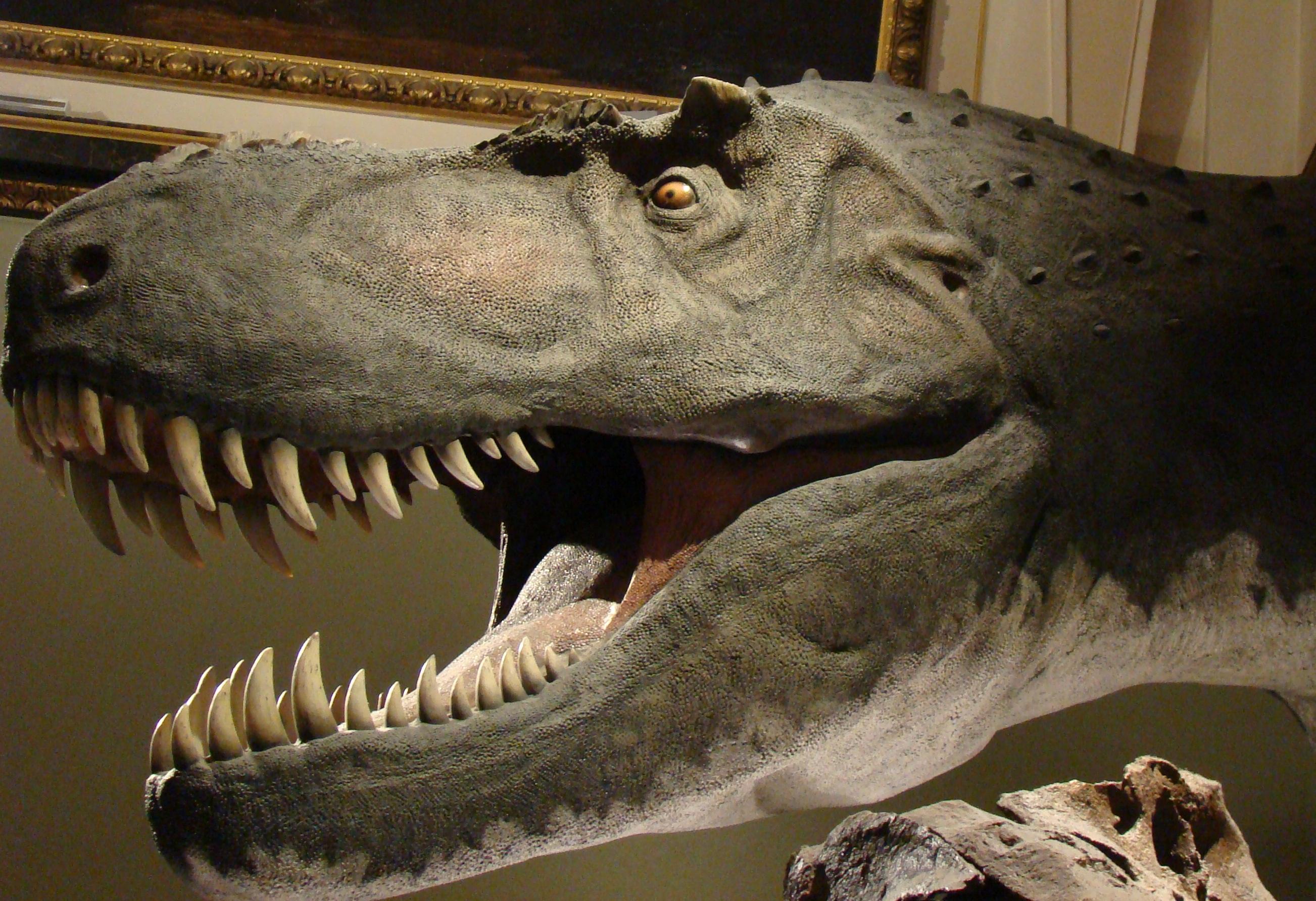 Fosile de dinozauri, bucăți de meteorit și amoniți uriași