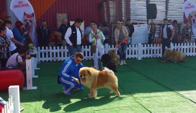 Dog Fest la Hornbach Timisoara, 24 septembrei 2016